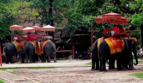 Elephant rides in Ayutthaya